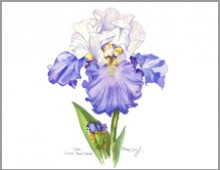 Sultan Blue & White Iris – Carolyne Roehm