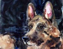 German Shepherd- Robert Wagner's Love