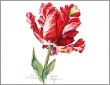 Tulip- Estella Rejveld- Carolyne Roehm