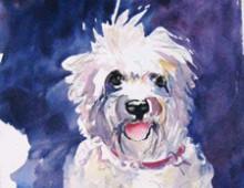 Wheaton Terrier- Annie